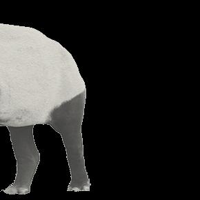 動物の獏の挿絵1