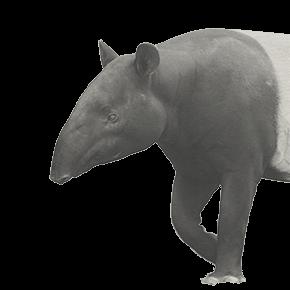 動物の獏の挿絵2